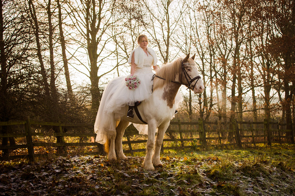 Leicestershire equine photographer