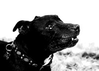 dog_photographer_Leicestershire-13