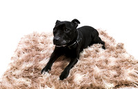 dog_photographer_Leicestershire-14
