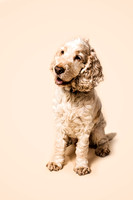dog-portrait-stanspals-dog-photographer-2