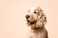 dog-portrait-stanspals-dog-photographer-3