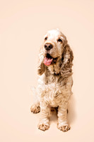 dog-portrait-stanspals-dog-photographer-5