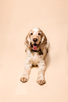 dog-portrait-stanspals-dog-photographer-9