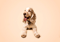 dog-portrait-stanspals-dog-photographer-12