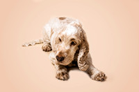 dog-portrait-stanspals-dog-photographer-14