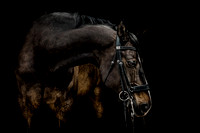 equine-photography-cheshire-8