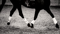 equine-photography-cheshire-4