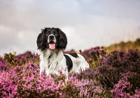 Dog Photography UK