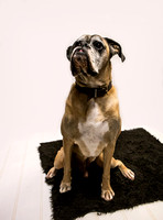 Dog_photographer_Leicestershire-20