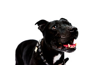 dog_photographer_Leicestershire-4