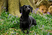 Dog_photographer_Derbyshire-4
