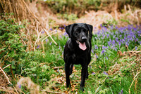 Dog_photographer_Derbyshire-10
