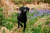 Dog_photographer_Derbyshire-11