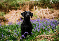 Dog_photographer_Derbyshire-16