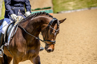 horse_photographer_leicestershire-4