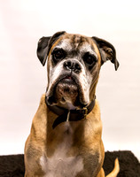 Dog_photographer_Leicestershire-19