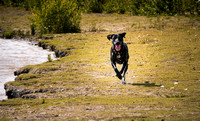Dog_Photographer_Derbyshire