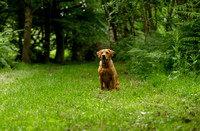 Labrador_dog_photography-9