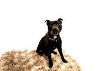 dog_photographer_Leicestershire-9