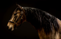 Equine_FineArt