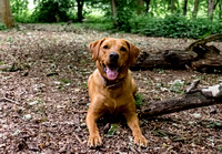 Labrador_dog_photography-19